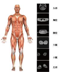 BE-1C普及型人体成分分析仪